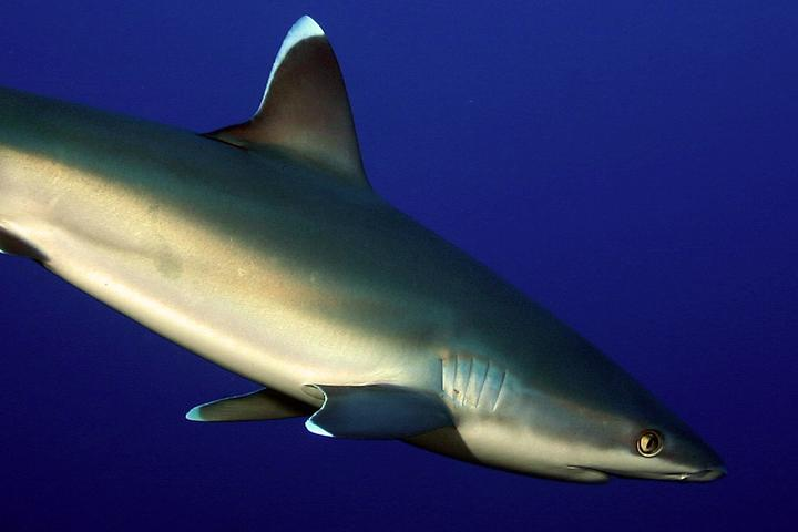 Sharks of South Africa