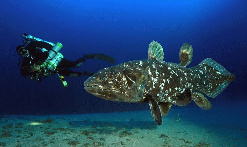 Peter Timm, who originally discovered coelacanths in Jesser Canyon at a depth of over 100m below sea level. Image: iSimangaliso Wetland Park Authority
